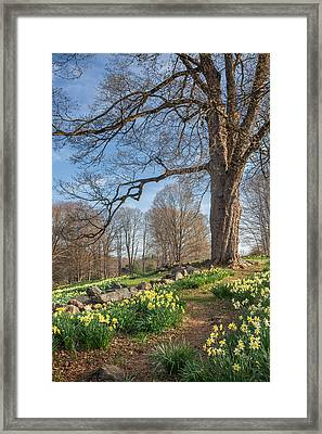Spring Path Framed Print