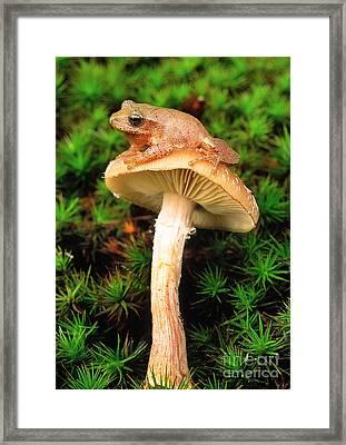 Spring Peeper On Mushroom Framed Print by Gary Meszaros