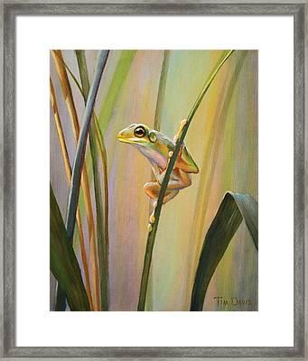 Spring Peeper Framed Print by Tim Davis