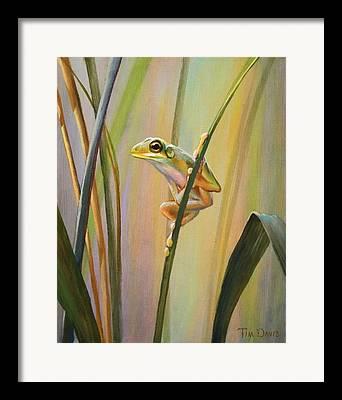 Spring Peepers Framed Prints
