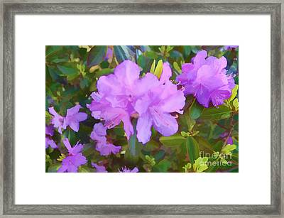 Spring Pink Azalea Framed Print