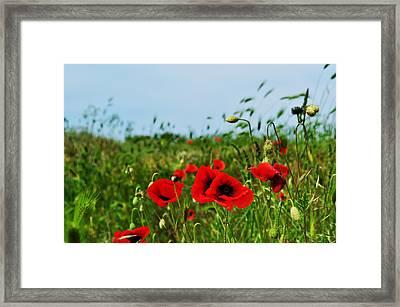 Spring Poppy Field Framed Print by Marina Slusar