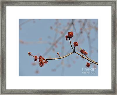 Spring Promise Framed Print by Jola Martysz