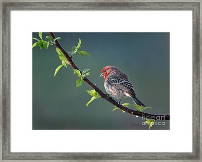Framed Print featuring the photograph Song Bird In Spring by Nava Thompson