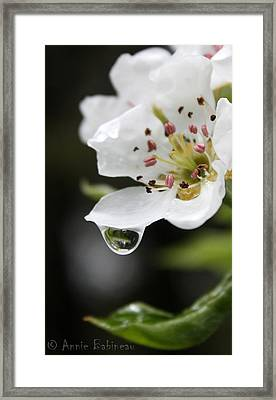 Spring Rain Framed Print by Anne Babineau