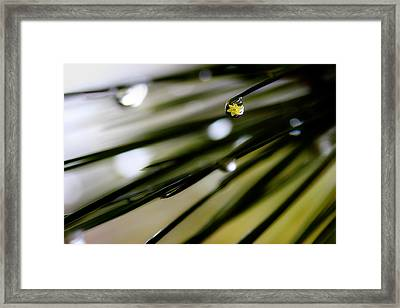Spring Rain On The Pines Framed Print by Michael Eingle