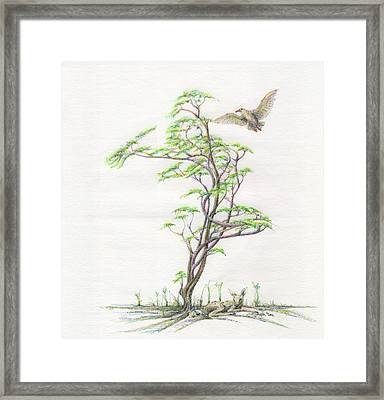 Spring Rising Framed Print by Mark Johnson