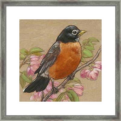 Spring Robin 3 Framed Print
