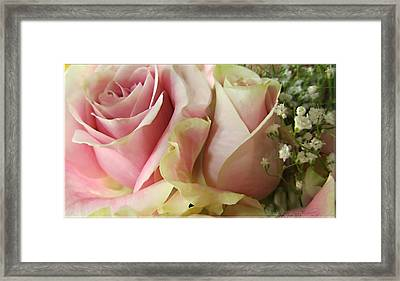 Spring Romance Pink Roses Framed Print by Danielle  Parent
