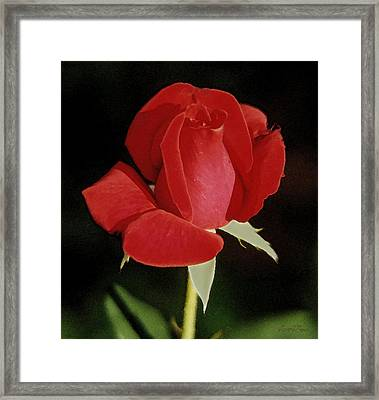 Spring Rose - Taos New Mexico Framed Print