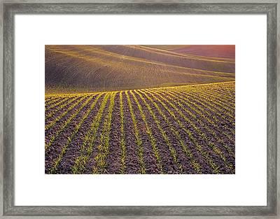 Spring Rows Framed Print