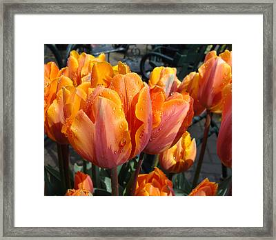 Spring Shower Framed Print by Cheryl Hoyle