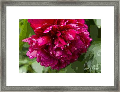 Spring Shower Peony 2 Framed Print by Jeanette French