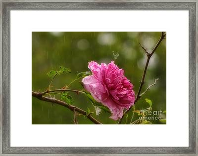 Spring Showers Framed Print by Peggy Hughes