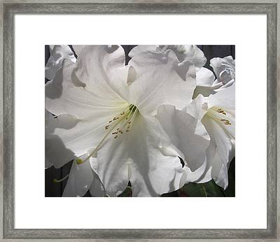 Spring Snow Framed Print by Crista Forest