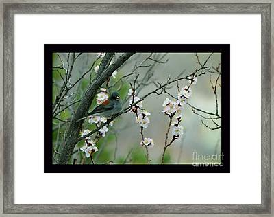 Spring Snow In Apricots Framed Print by Susanne Still