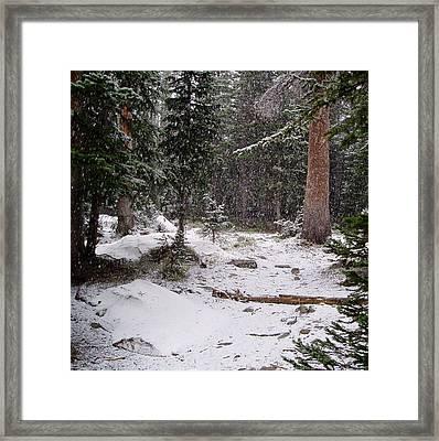 Spring Snow Shower Framed Print