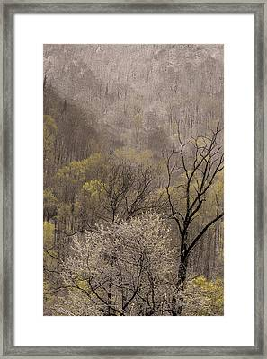 Spring Snow Framed Print by Tom  Reed