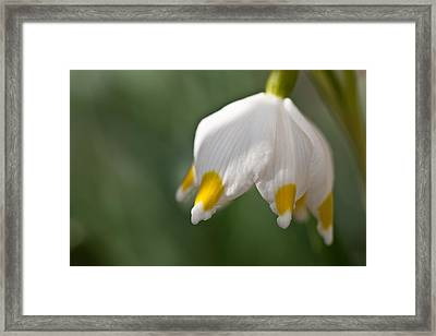 Spring Snowflake Framed Print by Andreas Levi