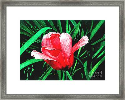 Spring Solo Framed Print by Barbara Jewell