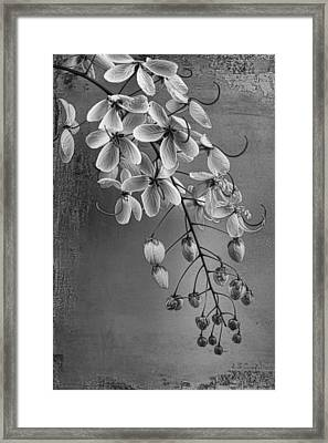 Spring Song Framed Print by Chrystyne Novack