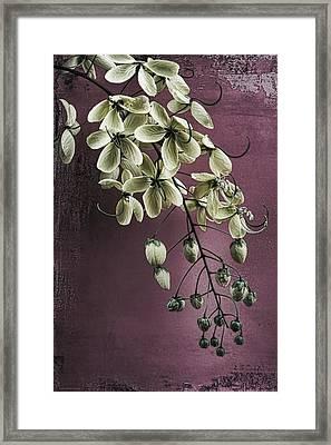 Spring Song II Framed Print by Chrystyne Novack