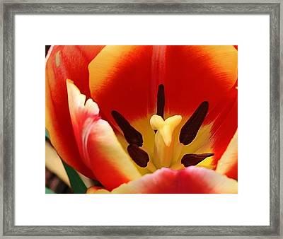 Spring Splendor Framed Print by Bruce Bley