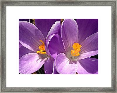 Framed Print featuring the photograph Spring Sprang by Gwyn Newcombe