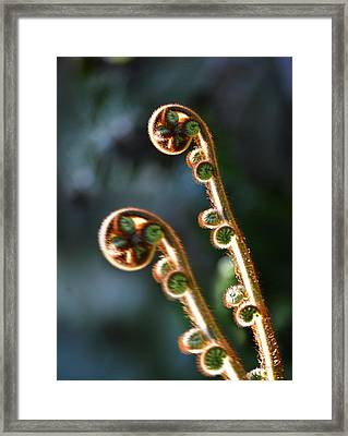 Spring Stanza Framed Print by Xueling Zou