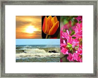 Spring Summer Collage Framed Print by Sandi OReilly