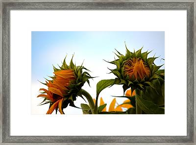 Spring Sun Shine Framed Print by Gregory Merlin Brown