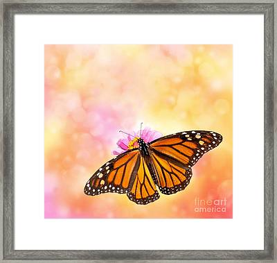 Spring Sunlight Framed Print