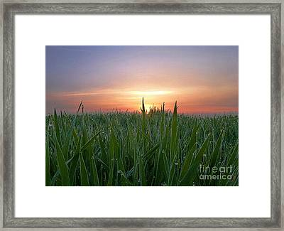 Spring Sunrise Framed Print by AmaS Art