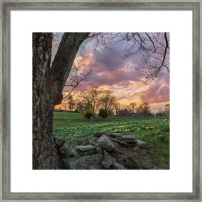 Spring Sunset Square Framed Print