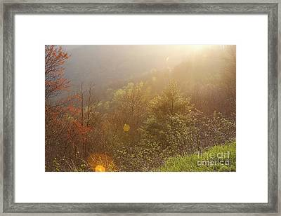 Spring Sunshine Framed Print