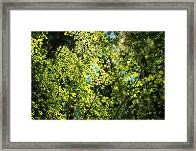 Spring Sunshine Framed Print by Kunal Mehra
