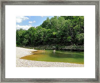 Spring Swin Framed Print by Cindy Croal