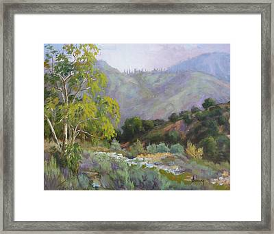 Spring Sycamore Framed Print by Sharon Weaver