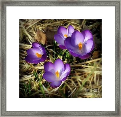 Spring Framed Print by Sylvia  Niklasson