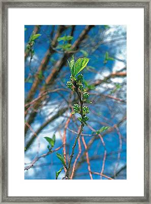Spring Framed Print by Terry Reynoldson