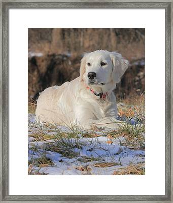 Spring Thaw Framed Print by Coby Cooper
