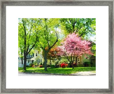 Spring - The Trees Are Flowering On My Street Framed Print