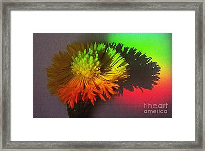 Spring Through A Rainbow Framed Print