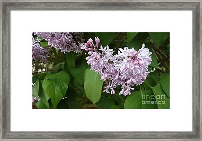 Spring Time Beauty Framed Print by Julie Koretz
