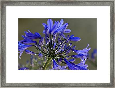 Spring Time Blues Framed Print by Menachem Ganon