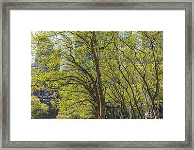 Spring Time In Bryant Park New York Framed Print by Angela A Stanton