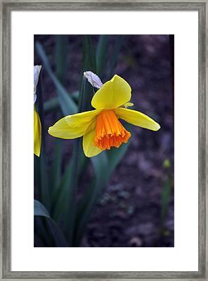 Spring Time Framed Print by Larry Jones