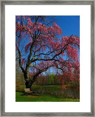 Spring Time Framed Print by Raymond Salani III