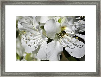 Framed Print featuring the photograph Spring Time by Sandy Molinaro