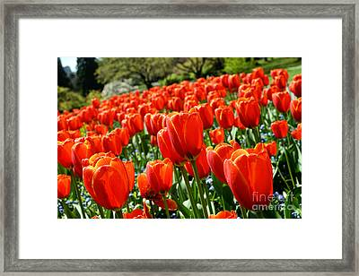 Spring Time Tulips 3 Framed Print by Terry Elniski